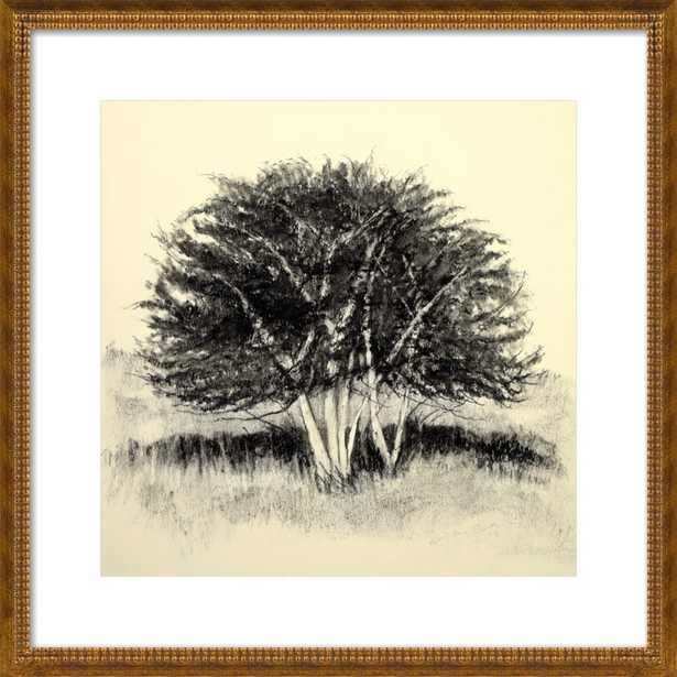Old Apple Tree by Rich Gombar for Artfully Walls - Artfully Walls