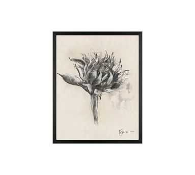 """Charcoal Sunflower Sketch, Single Bloom, 16"""" x 20"""" Wood Gallery, Black, No Mat - Pottery Barn"""