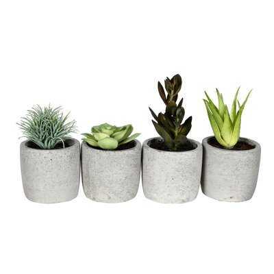 4 Artificial Succulent in Pot Set - Wayfair