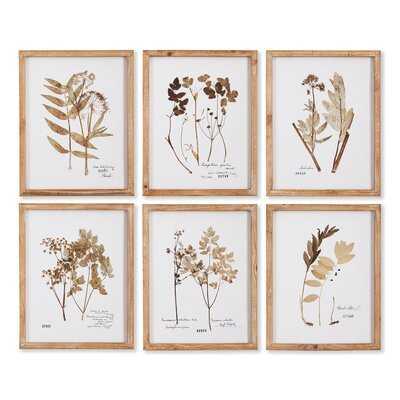 Pressed Leaf Study - 6 Piece Picture Frame Print Set on Paper - Wayfair