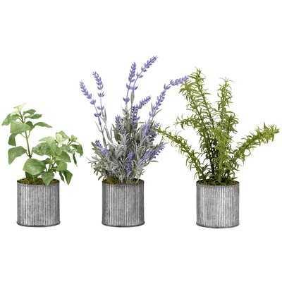 Basil, Lavender and Springeri in Tin Floor Foliage Plant in Planter Set - Wayfair