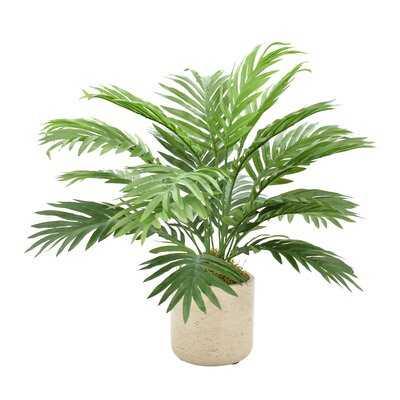Areca Floor Palm Plant in Pot - Birch Lane