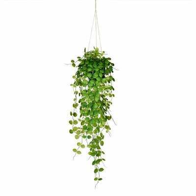 Artificial Ivy Plant - Wayfair