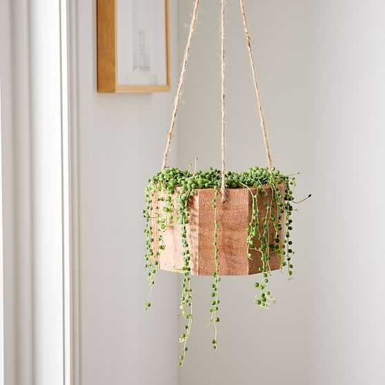 6in Succulent String of Pearls in Hanging Planter - West Elm