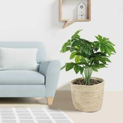 Artificial Foliage Plant in Basket - Wayfair