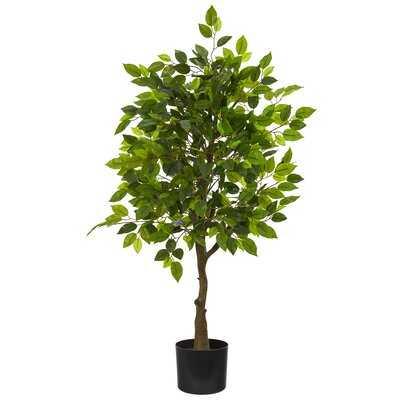 Ficus Tree in Pot Liner - Wayfair