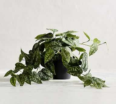 Faux Trailing Silver Philodendron Houseplant - Pottery Barn