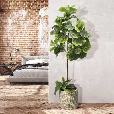 5-foot Fiddle Leaf Fig Tree In White Basket - Wayfair