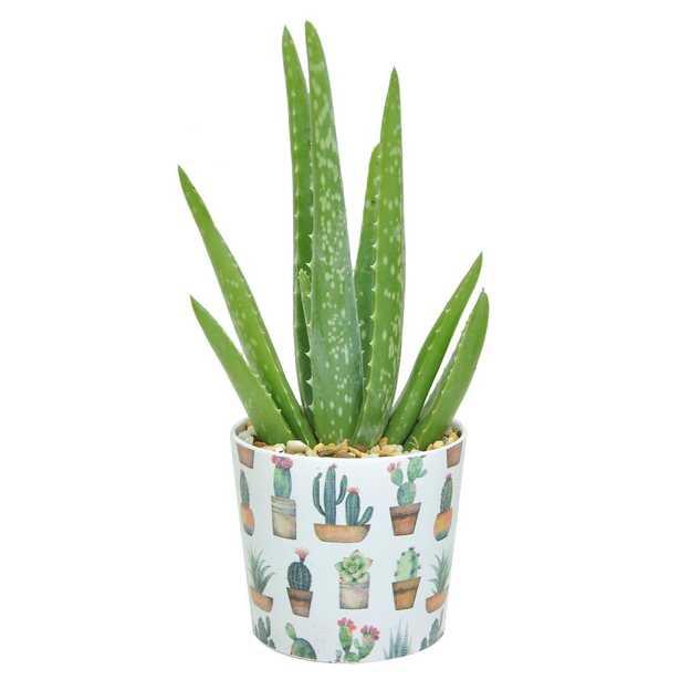 Costa Farms 4 in. 2-Tone Aloe in Gold Ceramic - Home Depot