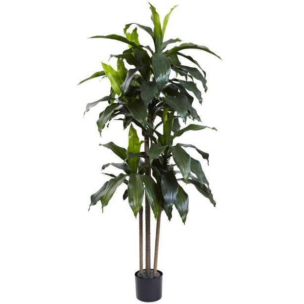 5 ft. Indoor/Outdoor UV Resistant Dracaena Plant - Home Depot