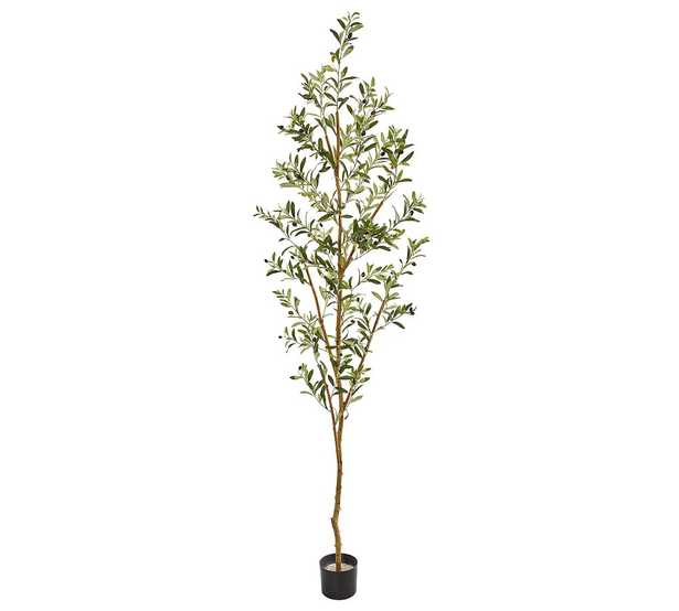 Faux Olive Tree, 6.5' - Pottery Barn