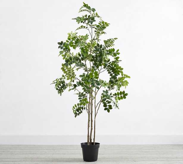 Faux Potted Green Leaf Tree, 6'H - Pottery Barn