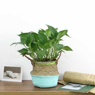 Foldable Seagrass Basket - Wayfair