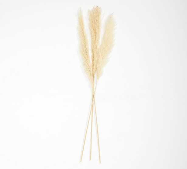 Pb Pampas Grass Branch: S/3: Golden - Pottery Barn