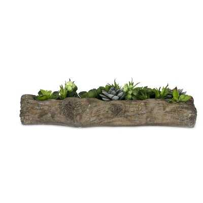 Faux Aloe and Agave Succulent in Planter - Wayfair
