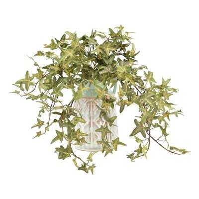 Variegated Ivy Desktop Foliage Plant in Rustic Pot - Birch Lane