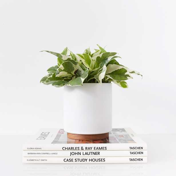 LBE Design Ceramic Planter + Plinth, White - Lulu and Georgia
