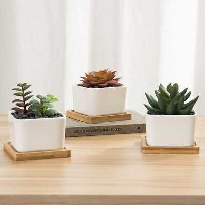 Set Of 3 Artificial Succulent Plants In Planters With Bamboo Trays - Wayfair