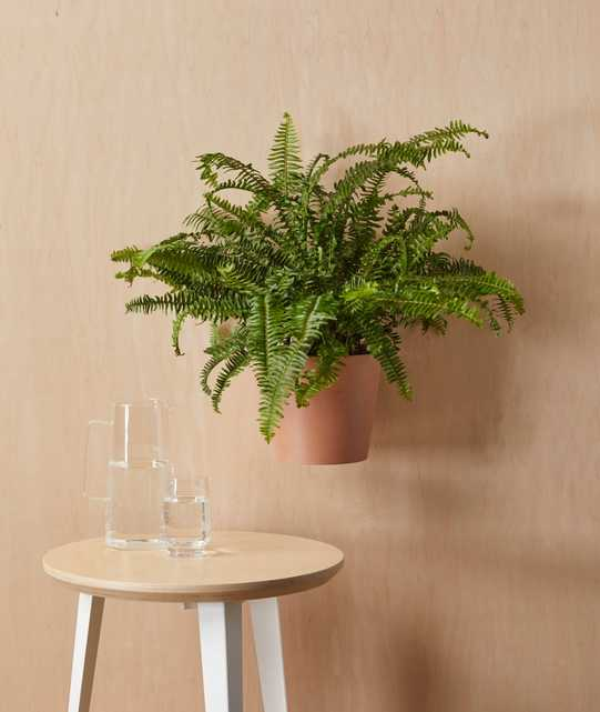 """Ecopots Round Wall Hanging Pot - Medium (8"""") -  Clay - Bloomscape"""