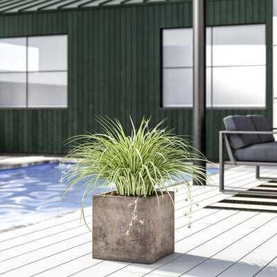 16x16 Gerome Concrete Planter Box - AllModern