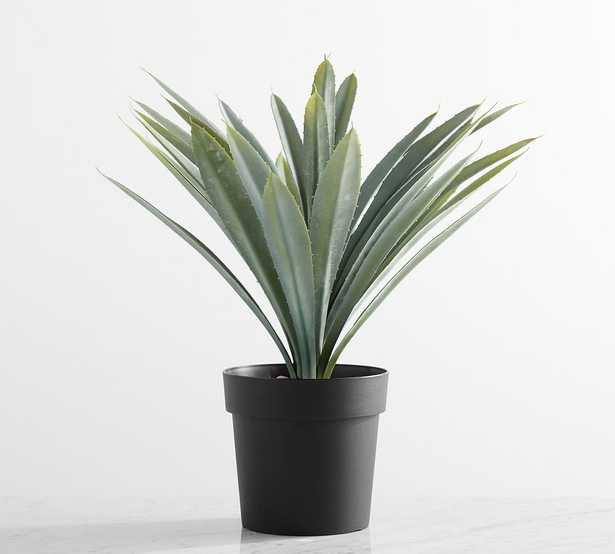 Potted Succulents,Large,Faded Stripe Agave - Pottery Barn