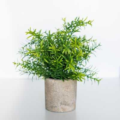 Rosemary Rosemary Plant in Pot - Wayfair
