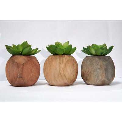 3 Artificial Succulent Plant in Planter Set - Wayfair