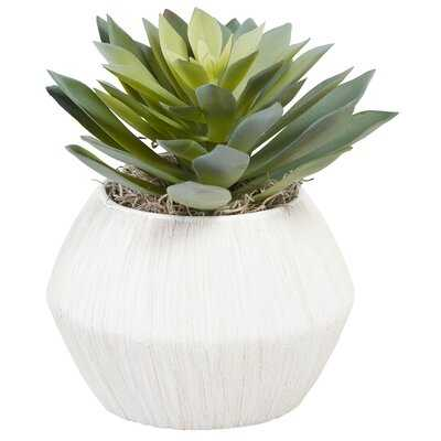 Foliage Plant in Decorative Vase - Wayfair
