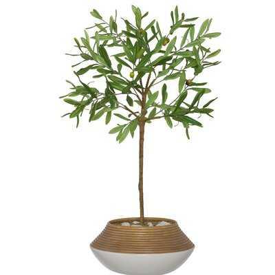 Artificial Olive Tree Tree in Planter - Birch Lane