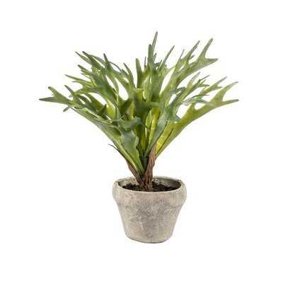 Artificial Staghorn Plant in Pot - Wayfair