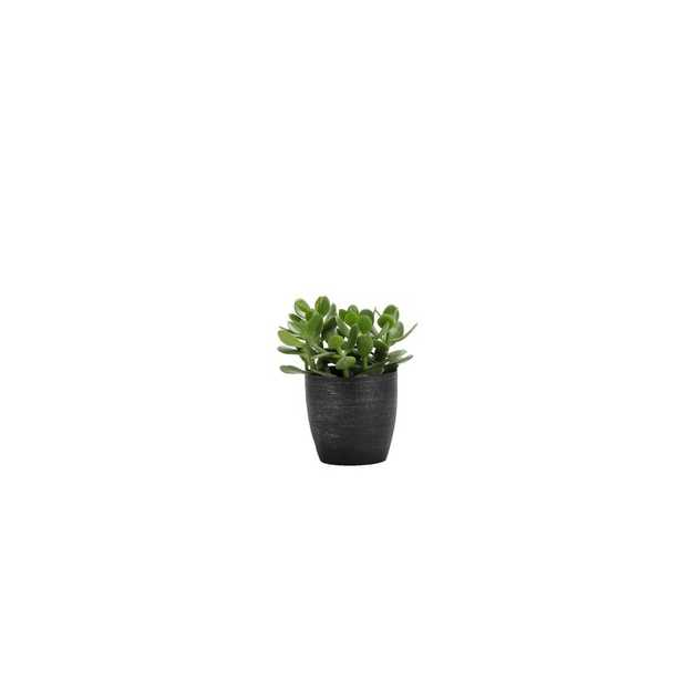 """Thorsen's Greenhouse 7"""" Live Jade Plant in Pot Base Color: Brushed Silver - Perigold"""