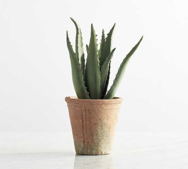 Potted Succulents,Medium,Spike Aloe - Pottery Barn