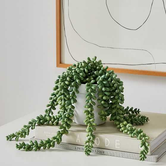 Faux Potted Donkey Tail, Small - West Elm