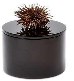 Round Black Box w/ Sea Urchin - One Kings Lane