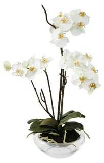 "21"" Phalaenopsis in Glass Vase, White - One Kings Lane"
