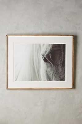 Quiet Horse Wall Art - 25.5''H, 33.5''W - Framed - Anthropologie