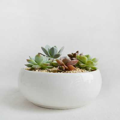 Succulent Planter with a Bamboo Stand - Etsy