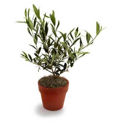 Olive Tree - surlatable.com