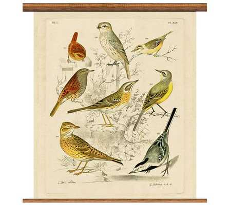 "Vintage Inspired Ornithology Collection Educational Chart - 33""x36"" - Pottery Barn"