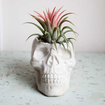 Skull Planter, concrete plant pot, Garden Home Decor - Etsy