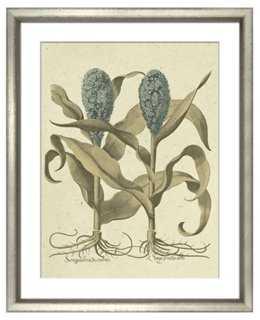 Basilius Besler, Botanical II 1613 - One Kings Lane