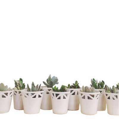 Ivory Table Top Planter - Medium - Domino