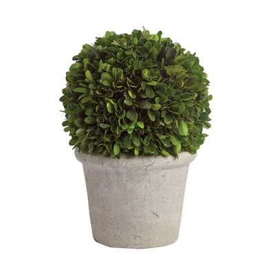 Preserved Greens Ball in Pot - Small - Wayfair