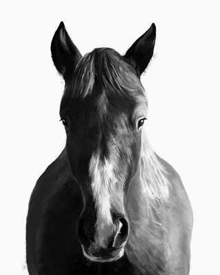 "Horse - 28"" x 34"" - Unframed - Society6"