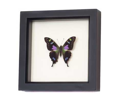 """Real Framed Butterfly Shadowbox Display- 6"""" H x 6"""" W x 1¼ """" D.- Black frame - Etsy"""