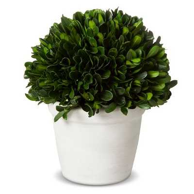 """Smith & Hawken® Boxwood Topiary in Pot - 6"""" - Target"""
