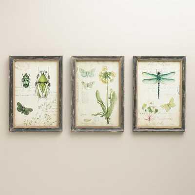 "Curiosities Wall Art, Set of 3 - 9.38""W x 13""H - Framed-Antique Wood - World Market/Cost Plus"
