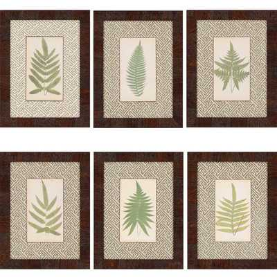 Ferns by Lowes 6 Piece Framed Graphic Art Set - Wayfair