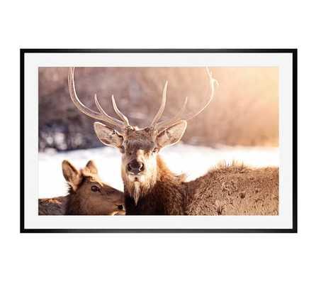 """Sun Elk Framed Print - 28"""" x 42"""" - Black frame - Pottery Barn"""