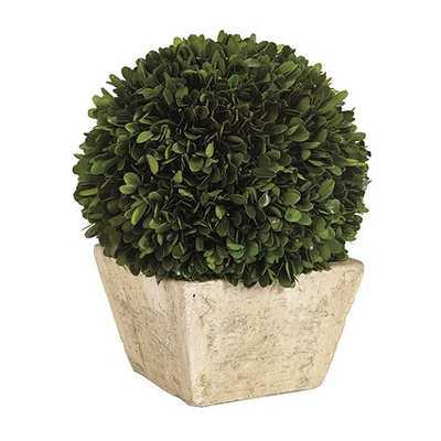Preserved Boxwood Topiary, Large Dome - Ballard Designs
